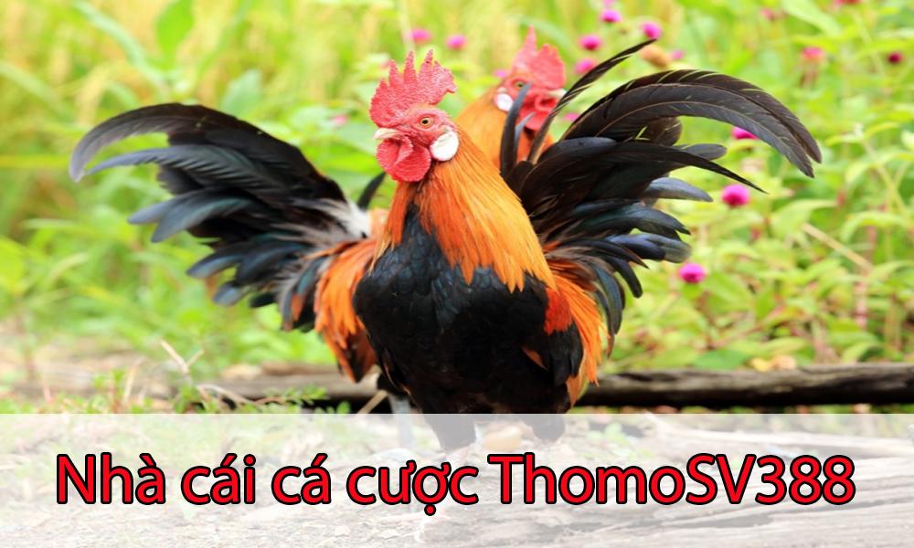 Giới thiệu về nhà cái cá cược ThomoSV388